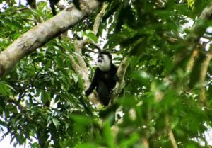 Nyungwe Forest National Park Activities