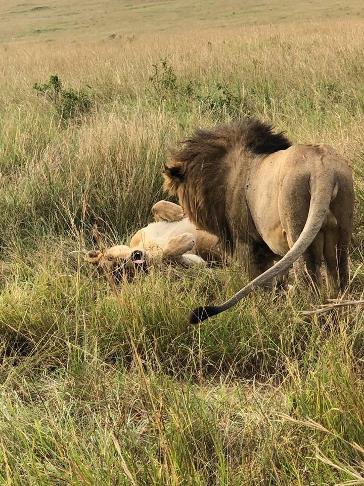 Budget Uganda Safaris and cheap Uganda Trip package