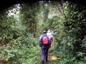 Mount Bisoke Crater Lake Hike