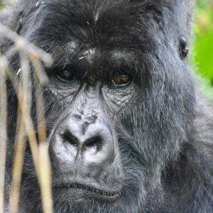 Virunga Park