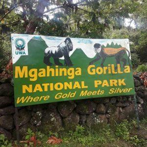 Mgahinga Park Gorilla Park