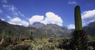 Rwenzori National Park