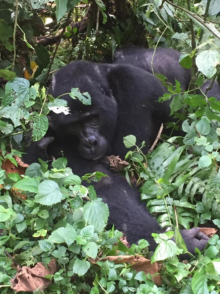 Nyiragongo Volcano Hike Congo Safaris and Congo Tours