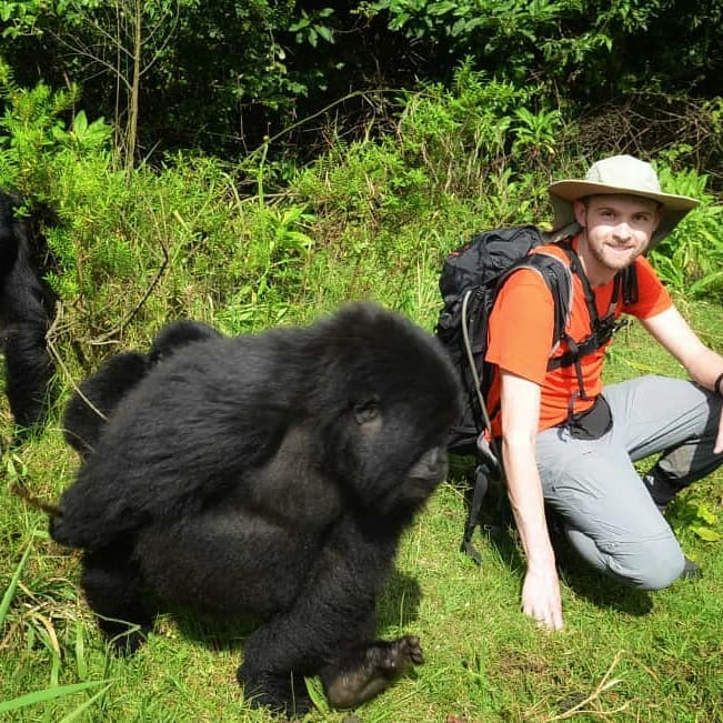 Gorilla Tours and Gorilla Trekking in African Gorilla National Parks