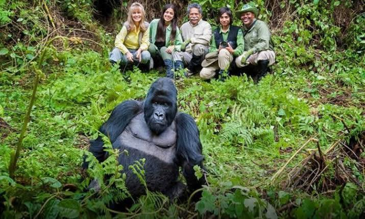 Gorilla Trek Rwanda and Chimpanzee Tracking in Nyungwe Forest