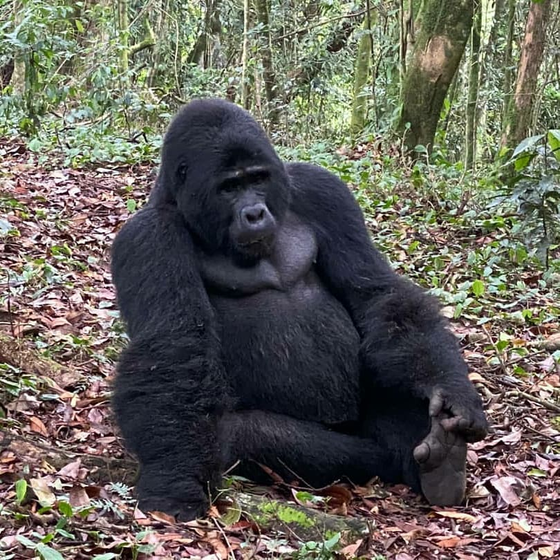 Gorilla Trekking Uganda Package, 4 Days Queen Elizabeth National Park