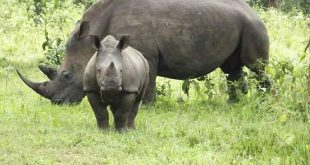1 Day Ziwa Rhino Tracking