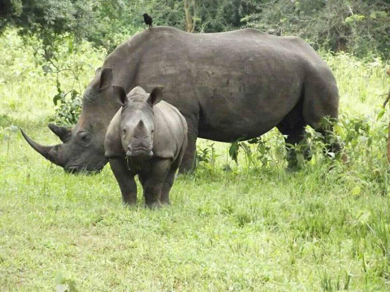 1 Day Ziwa Rhino Tracking