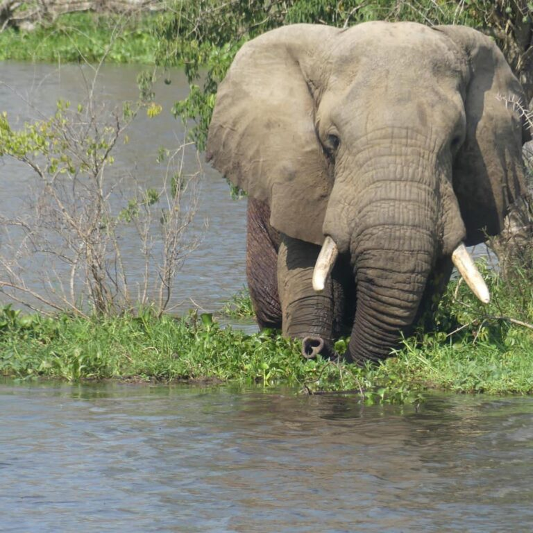 How many Days in Queen Elizabeth national park?