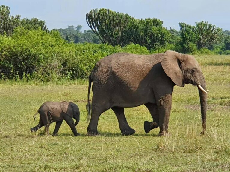 what is the best month to visit Uganda?